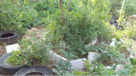 Spiral Herb Garden